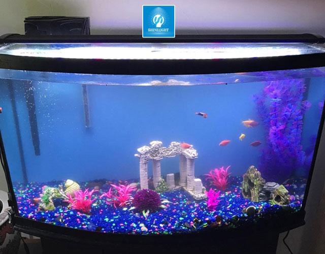Tiêu chí chọn đèn led âm nước hồ cá